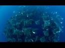 Die grazilen Unterwasser-Flieger können über Wasser ganz gut schweben doch in dieser Dimension hat man sie bislang nirgendwo anders gesehen