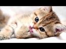 Сенсація Топ 10 Цікавих фактів про котів