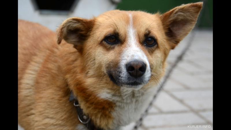 Босик история маленькой собаки с большим и храбым сердцем