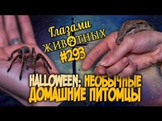 Глазами животных #293. Halloween - необычные домашние питомцы в самом мистическом выпуске года