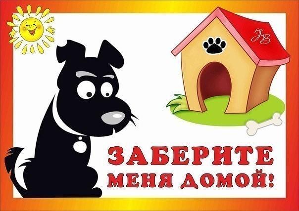 Прошедшей, картинки собаке нужен дом