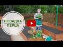 Посадка и выращивание перца ✿ Рассада Секреты высадки в открытый грунт Сад огород с HitsadTV