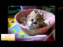 Смешные и прикольные маленькие котята!