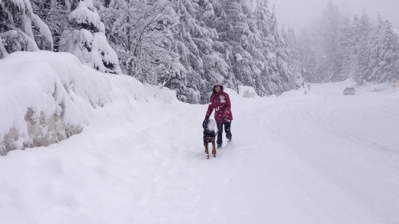 Snowfall in Bayshores - 10 hours of snow - crazy dog