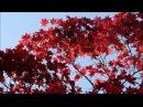 Японская осень г Киото р н Арасияма