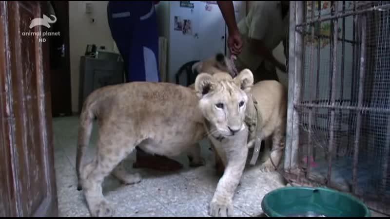 AnPl Спасение диких животных Wild Animal Rescue 2017 2