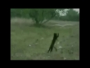 СМЕШНОЕ видео ПРО ЖИВОТНЫХ, уморительные животные, Подборка приколов с животным,