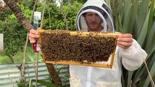Honey bound brood - Flow Hive 🐝🍯