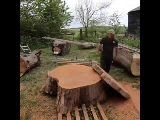 Спил дерева -