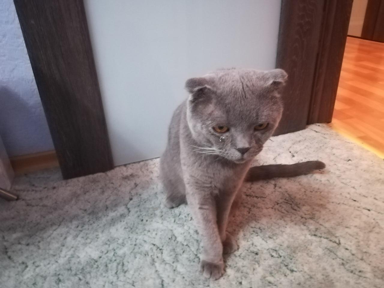Котик очень ищет дом.
