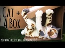 Fursuit Video by Beetlecat Cute Calico Cat Plays With a Box