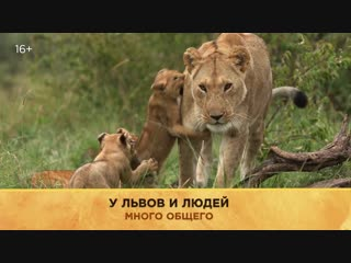 Большие кошки | National Geographic
