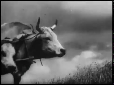 Zemlya Earth 1930 Dovzhenko. Фильм Земля. Довженко 1930