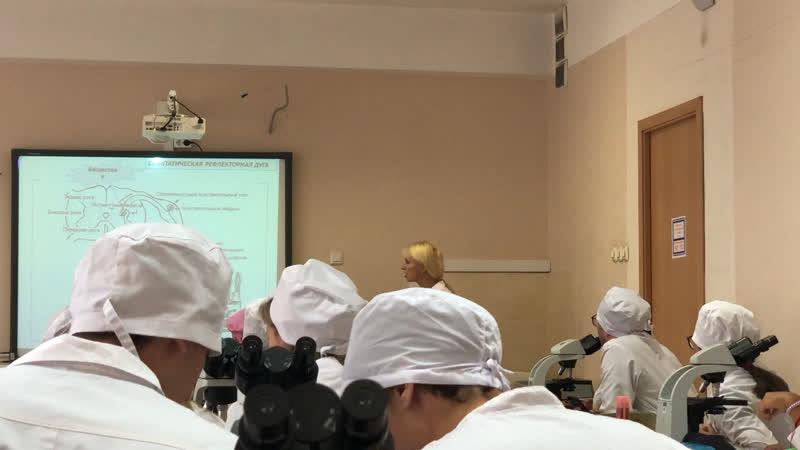 Нервная система - часть 1 (Раимова ЭШ)