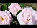 Вальс цветов/П.Чайковский балет Щелкунчик/Waltz of flowers P. Tchaikovsky