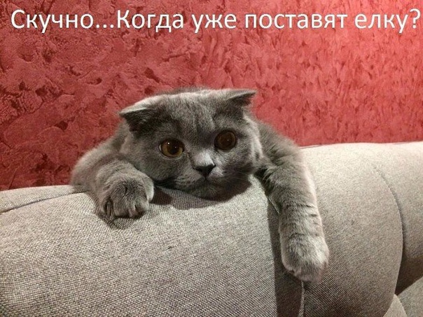 Счастье - это когда у вас есть Утро и новый День...