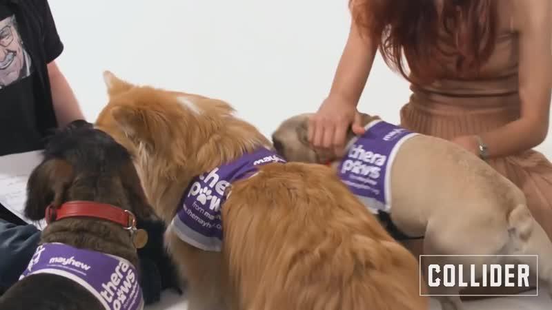 Том Холланд, Зендая и Джейкоб Баталон играются с собачками на интервью