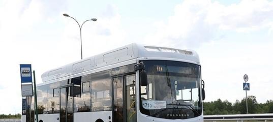 310 автобус воронеж графская расписание