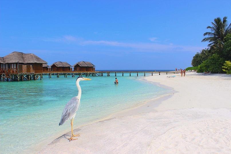 Плюсы и минусы отдыха на Мальдивах, изображение №1