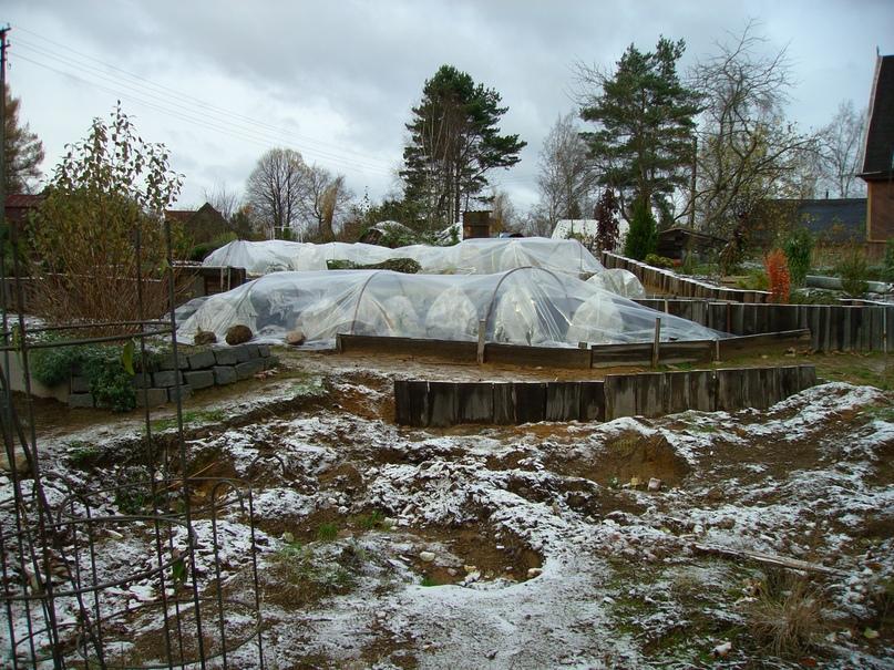 Общий вид укрытого на зиму розария