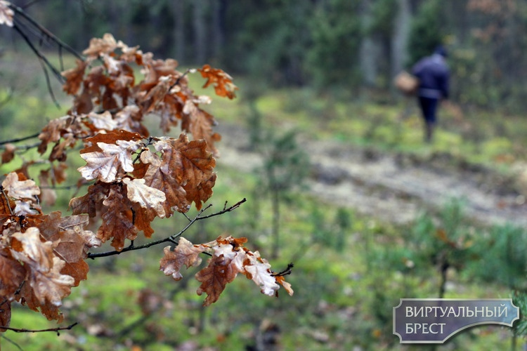 Дожди идут, а грибов больше не становится. Зато в лесу можно снимать кино про Бабу-ягу