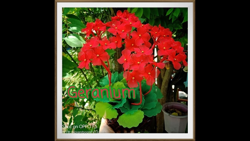 EP116 เจอราเนียม Geranium How to make nylon stocking flower by ployandpoom