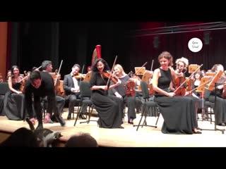 Бездомная кошка из Стамбула вышла на сцену во время выступления оркестра [NR]