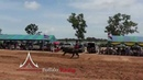 Buffalo Racing Pattaya Event