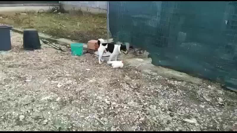 Пёс шпилит курицу 😂