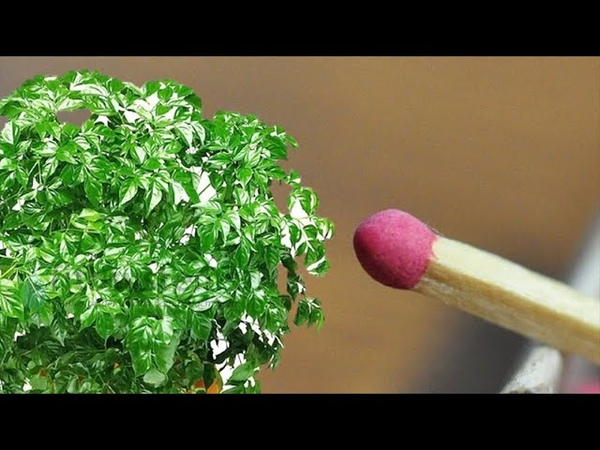 Зачем цветоводы помещают спички в цветочные горшки