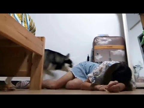 비브라토에서 가장 많이 본 동영상 컬렉션입니다 4올해의 재미있는 단편 영 548