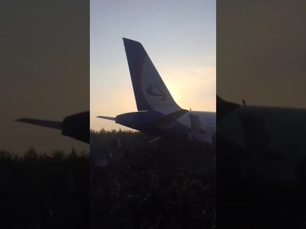 Самолет А-321 с 227 пассажирами совершил жесткую посадку из-за птиц, попавших двигатели