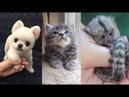 Bỏ ra ít phút nhìn thế giới loài vật dễ thương đến tận cùng cảm xúc động vật thật kỳ diệu