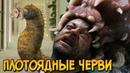 Плотоядные Докембрийские Черви из сериала Портал Юрского Периода питание размножение слабости