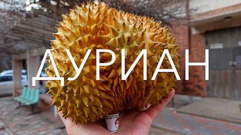 ДУРИАН Король фруктов или самый вонючий фрукт Пробуем Вкус Запах впечатления