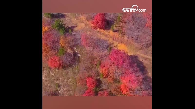 Живописный осенний пейзаж гор Айшань в городе Яньтай китайской провинции Шаньдун