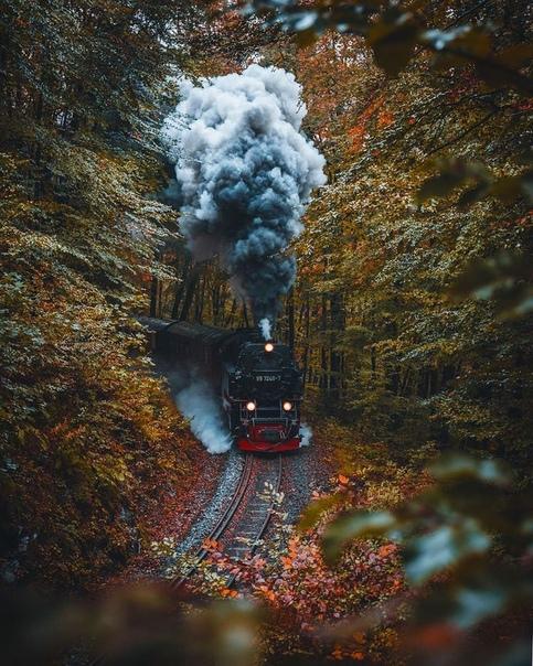На поезде через лес и горы