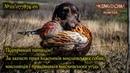 Увага! Підтримай петицію! За захист прав власників мисливських собак!