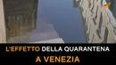Venezia, l'effetto della quarantena: l'acqua dei canali non è mai stata così limpida
