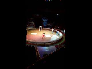Цирк, Тюмень, ВИП зона