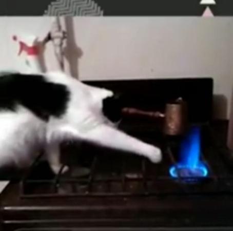 Kucing Lucu on Instagram Bocah ngapa sih 🙄 ▪️▪️▪️▪️▪️ 🎥 Via unknown DM for credit or removal 🐾 Tag teman kamu ❤️ Dapatkan update terbaru tent