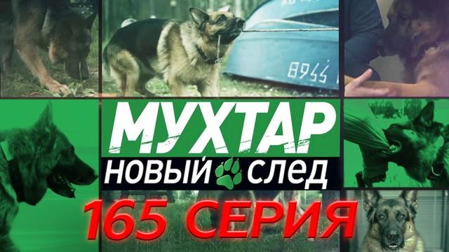 Мухтар Новый след 165 я серия Уловка