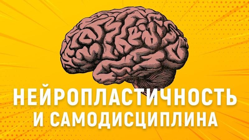 ИЗМЕНИ СВОЙ МОЗГ Нейропластичность и сила воли