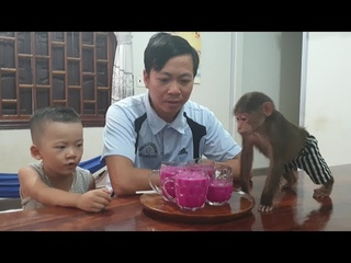 Baby Monkey | Doo Family Tastes Dragon Fruit Juice