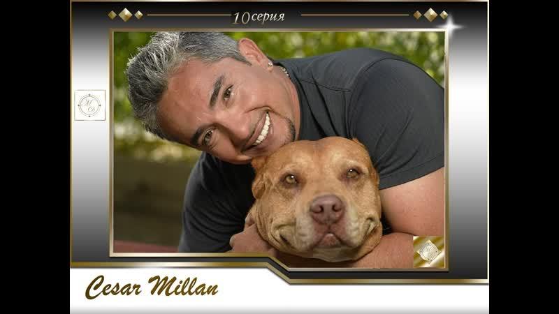 10 серия Сезар Миллан Переводчик с собачьего Jey Elis