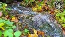 Звенящий Лесной Ручей с Пением Птиц. 4К Видео 60 fps.