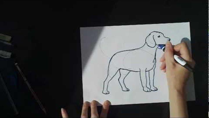Урок рисования Собака Бигль How to draw a dog beagle