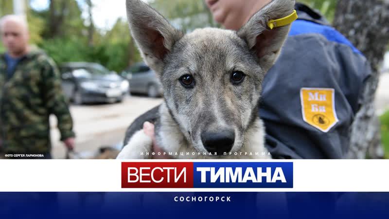 С этого года вступил в силу федеральный закон об ответственном обращении с животными