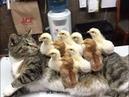 「面白い動物」あり得ないことをする犬, 猫・おもしろ犬, 猫のハプニン1