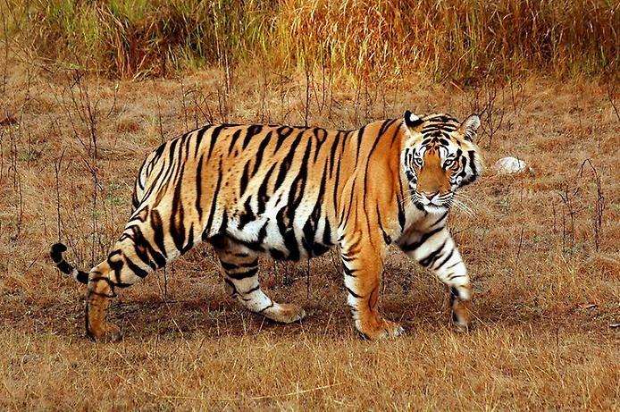 Национальный парк Канха, изображение №3
